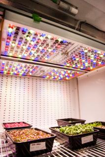 NASA taps Osram to support its Food Production Research