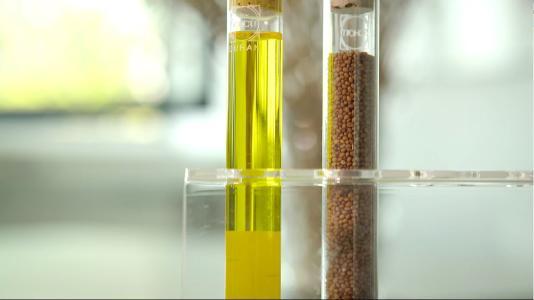 Leindotteröl und Samen, Bilder: DAW SE