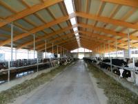 Einsatz der High Grade Faser im landwirtschaftlichen Bereich: Milchviehstall  Foto: Fabrino