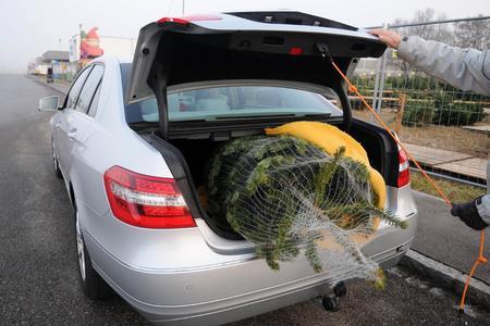Auch für den Baumtransport im Kofferraum gilt: mit Spanngurten sichern