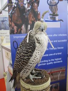 Falke im deutschen Pavillon (Arab Health)