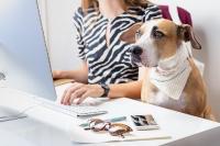 Hund im Büro: Der Vierbeiner als Gesundheits-Booster und Corporate Plus