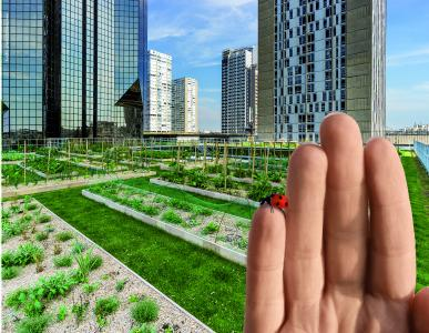 The innovative systems in Green Roof 4.0 from ZinCo have the potential to revolutionise the use of roofs, with regard to water retention, evaporation and biodiversity.