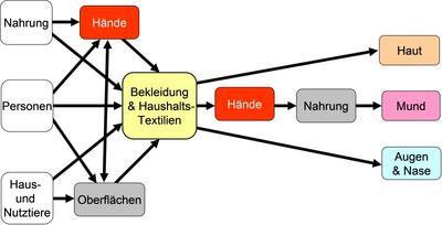 Schema der Übertragungswege von Keimen über Hände und Textilien (nach Bloomfield, 2011) © Hohenstein Institute