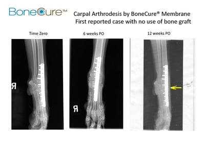 RegeneCure Starts Worldwide Veterinary Distribution of BoneCure Membrane Implant for Acceleration of Fracture Healing and Carpal Arthrodesis
