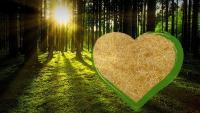 die Vielseitigkeit natürlicher Holzwolle