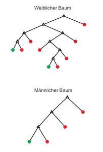 Abbildung: Die Entscheidungsbäume von einem Mann und einer Frau mit nahezu identem Ergebnis. Beide bewerteten im Versuch etwa 80 Prozent der Teile den Anweisungen entsprechend richtig
