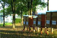 Bei Becker finden Bienen ab sofort ein sicheres Zuhause für ihr wertvolles Wirken © Becker-Antriebe GmbH