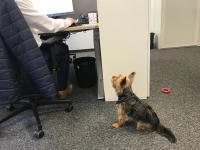 Haustiere am Arbeitsplatz