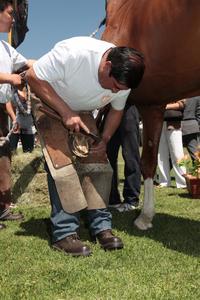 Hufeisen aus Kupfer schützen wertvolle Pferde