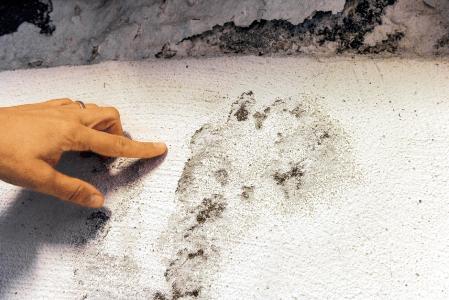 Schimmelbefall im Keller: Schnelles Handeln ist wichtig