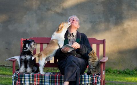 Haustiere als Kit für die Gesellschaft
