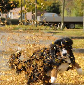 """Dieses Bild ist ein Beispiel für den """"Mitzieheffekt"""", bei dem der Hintergrund verwischt und der Hund scharf fotografiert wird"""