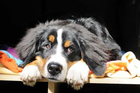 Bilder von faulenzenden Hunden laden zum Entspannen ein