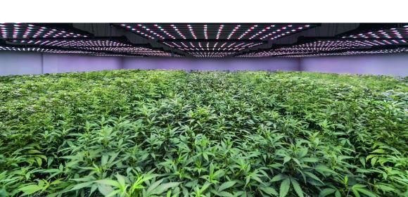 Produktion_Med_Cannabis_weisstechnik.jpg