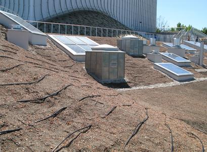 Die Tropfschlauchbewässerung gewährleistet auch in  Trockenperioden ausreichende Wasserzufuhr für die geplanten Rasenflächen.