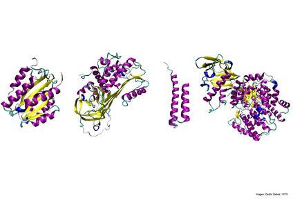 """Heute finden sich in der Natur zahlreiche Formen unterschiedlicher Proteinfaltungen. Die meisten dieser Formen haben sich seit dem biologischen """"Urknall"""" vor 1,5 Millarden Jahren entwickelt. Einen wichtigen Faktor für die Diversifizierung stellte dabei das Faltungstempo dar, wie die Studie herausfand. (Bild: Cedric Debes / HITS)"""