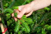 Die notwendige Wiederaufforstung der Wälder gelingt nur mit hohem Kostenaufwand.