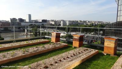 Vier Bienenvölker auf dem Dach sichern die Bestäubung der Nutzpflanzen. Quelle: Drone-view