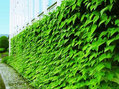 Okayama Plant