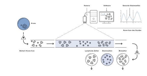 Durchbruch in der Stammzellenforschung: Die Stammzellen fließen mit genau definierter Geschwindigkeit, damit sie dem Durchflusskanal ohne Schaden entnommen, identifiziert, gezählt und in Reagenzgläser gefüllt werden können (Quelle: Bürkert)