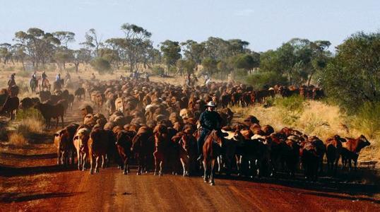 Regen in Australien hilft Rindvieh-Herden wieder aufzubauen
