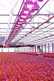 Flower Power - bright LEDs for healthy plant growth