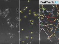 Save Time Using Automated Analysis of Chemotaxis Assays