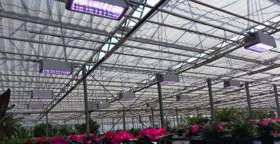LED sunlight for professional horticulture