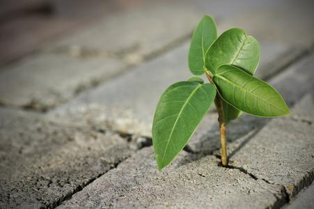 Durchsetzung Pflanze