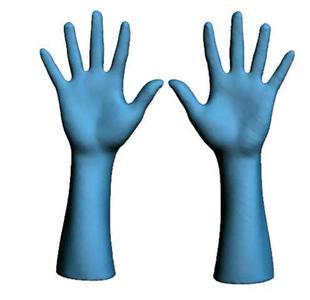 """""""Mittlere Hände"""" der Größe 8,5 / ©Hohenstein Institute"""