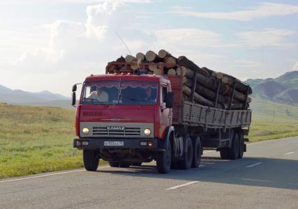 Bedeutsame Holzwirtschaft: Etwa jeder zweite Baum der Erde wächst auf russischem Boden. (Foto: Achim Zielke)