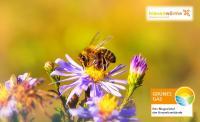 Bienenwärme - ausgezeichnet mit dem Grünes Gas-Label