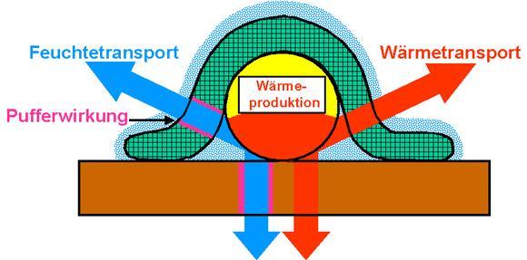 Im Laufe einer Nacht müssen von der Bettware ca. ¼ Liter Schweiß vom Körper des Schlafenden wegtransportiert und gleichzeitig das Wärmeniveau stabil gehalten werden – auch bei wechselnder Umgebungstemperatur