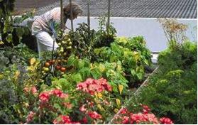 For the owners of this private roof garden in Wendlingen, fresh tomatoes are brought straight from the vegetable patch to the table