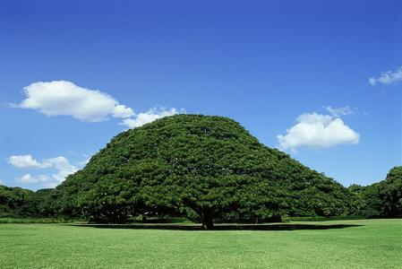 Hitachi Tree