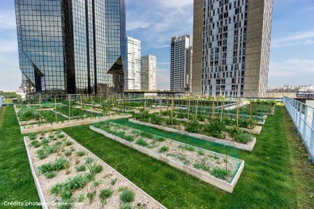 """Der Urban-Farming-Dachgarten der Kochschule """"Le Cordon Bleu"""" ist mit 1011 m² einer der Größten in Paris. Quelle: Drone-view"""