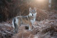 Wildtiere im neuen Licht betrachten