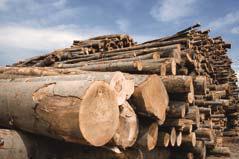 Die Lenzing AG produziert seit über 70 Jahren Regenerat-Fasern aus dem nachwachsenden Rohstoff Holz, Foto: Lenzing AG