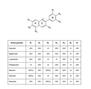 Abb. 1: Flavyliumkation und abgeleitete Anthocyanidinderivate