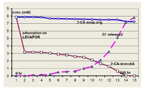 图3 1000 mg/L (7.8 mM) 2-氯苯胺降解,通过悬浮( )或固定( )采用的微生物。