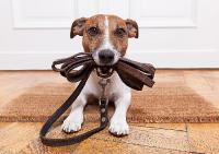[PDF] Happy Pet Club - Das tierische Netzwerk