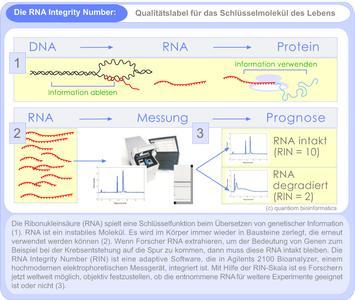 Grafik zur Darstellung der Bedeutung der RNA