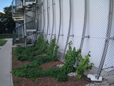 Auf geht's! Dank der vorgehängten Rankgitter finden die Kletterpflanzen ausreichend Halt.