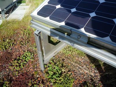 Höhenverstellbarer Solargrundrahmen und verschiedene Sedum- und Gräserarten.