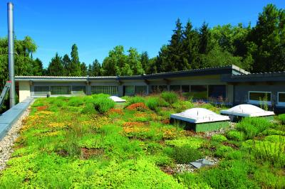 An Irrigated Extensive Green Roof is efficient