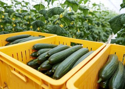 Gartenbau / © IPM/Messe Essen