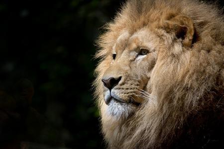 Afrika ist mehr als ein Safari-Park...