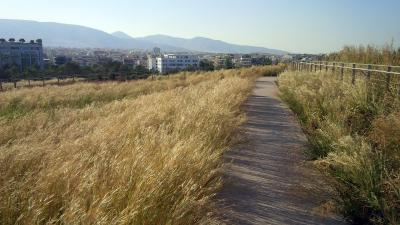 This pathway leads from the roof terrace, over the grassy roof of the National Library, to the large park / Source: H. Pangalou and Associates Landscape Architects