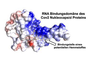 Mit Regensburger High-Tech gegen das Corona-Virus